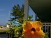 sunny_day_1